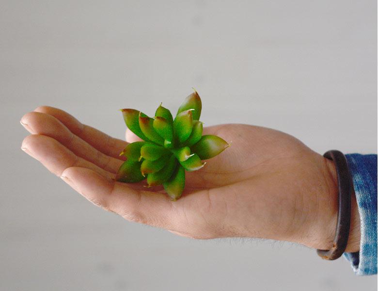 多肉植物 造花 フェイクグリーン フェイク多肉植物 エケベリア・クリスマス アーティフィシャルフラワー