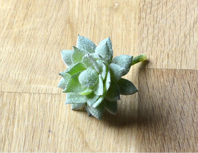 多肉植物 造花 フェイクグリーン フェイク多肉植物 パキベリア 霜の朝 アーティフィシャルフラワー