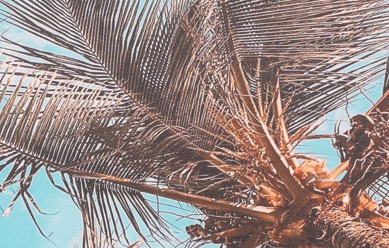 透き通るような青空に広がる、ヤシの木のアート
