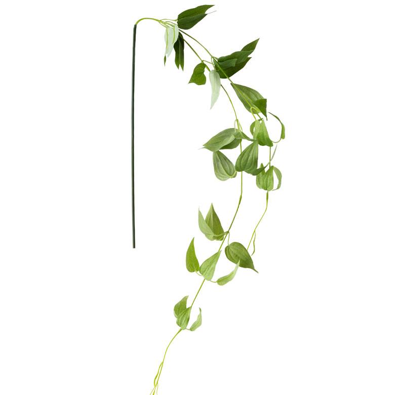 繊細で柔らかい葉が特徴